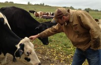 Tim checks out one of the cows